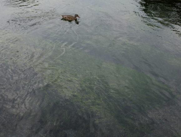 Wakutama Pond at the foot of Mount Fuji