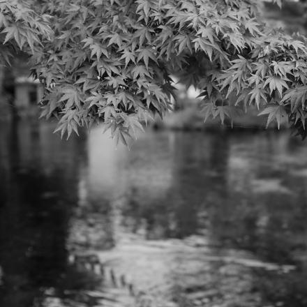 Fuji's water