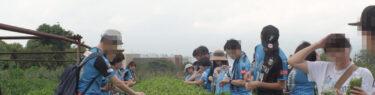 tea picking near Shimizu, Japan
