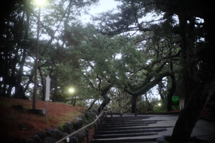 Miho Pine Grove in the rain (X-T1 & Xenon 25mmF1.4)