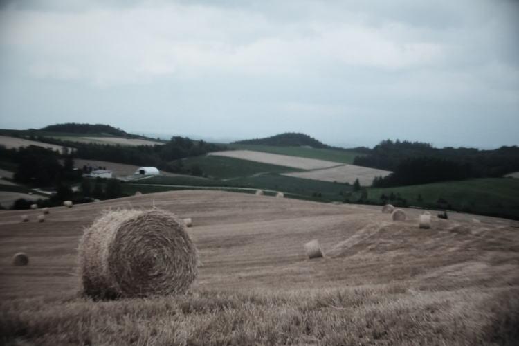fields of Biei Town in Hokkaido, Japan