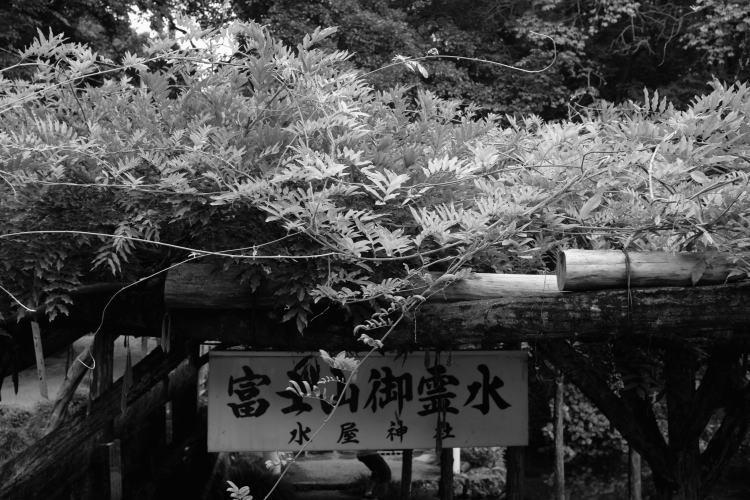 wakutama-pond