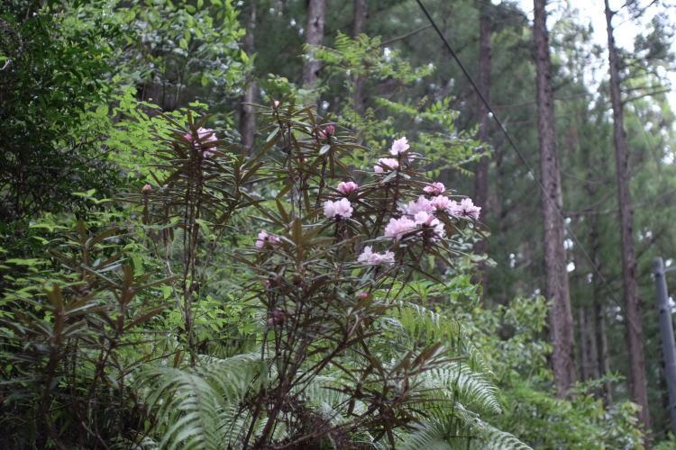 Beautiful nature at Chiiwa-kyo mountain gorge.