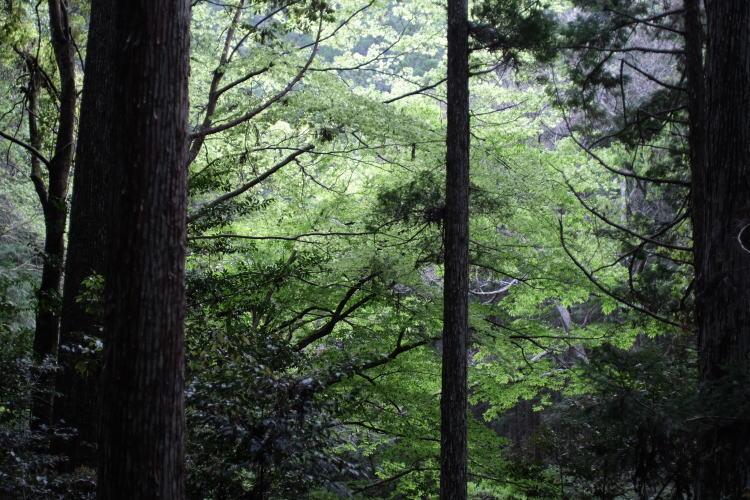 Nature in Aichi Prefecture, Japan