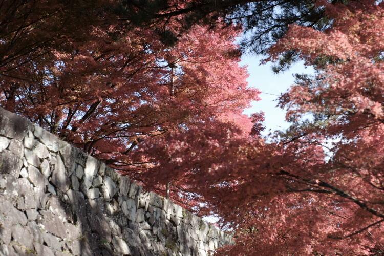 Stone wall of Gujo Hachiman Castle (郡上八幡城の石垣)