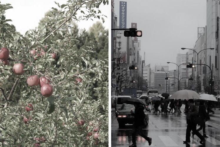 Apples of Aomori and Shinjuku, Tokyo (青森のリンゴと東京の風景)