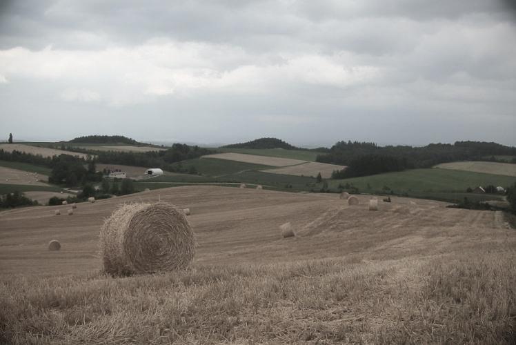 Fields of Biei in central Hokkaido(美瑛の農地)