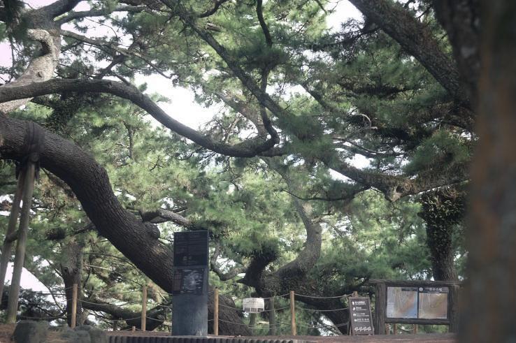Miho no Matsubara | 三保の松原