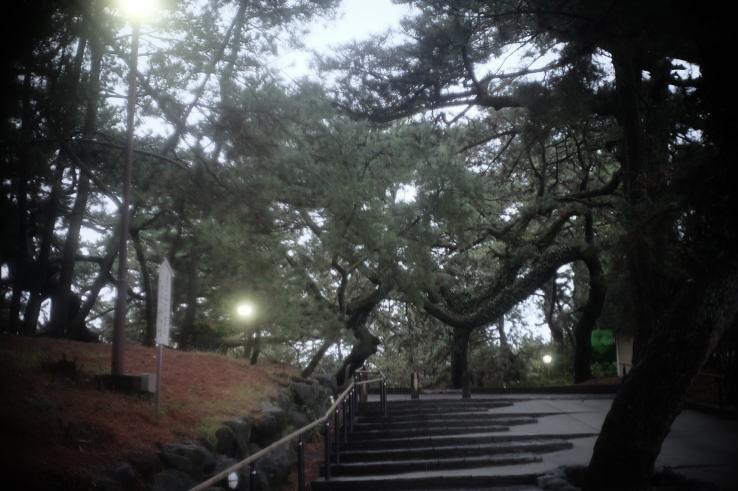 Miho Pine Grove in the rain (雨の三保松原)