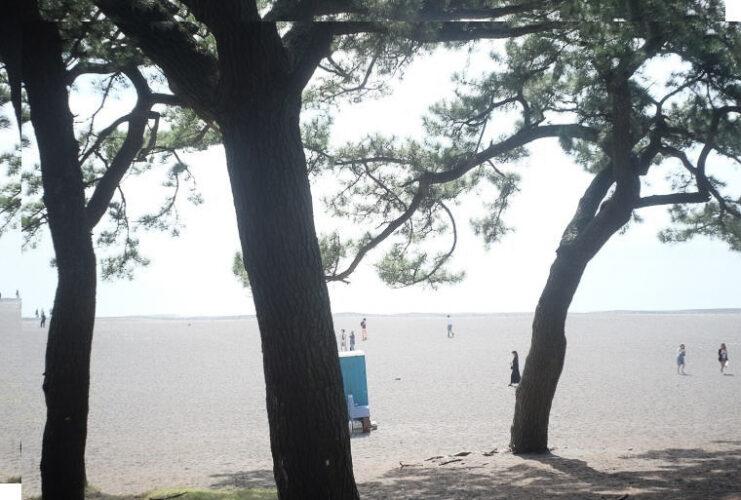 Miho Beach (三保の松原)