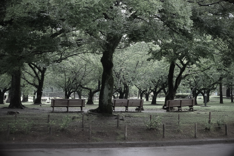 Sumpu Castle Park (with an XF 35mm F2R WR lens). (雨の駿府公園)