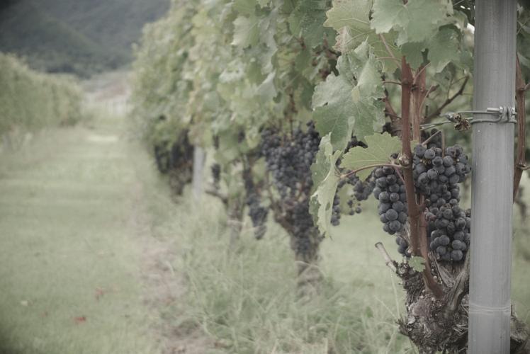 Katsunuma winery in Yamanashi.