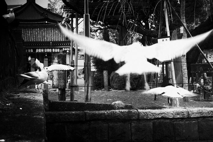 """Tandem"" by Tetsu Sawamura."