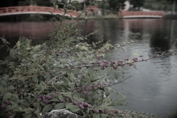 Wakutama Pond | 湧玉池
