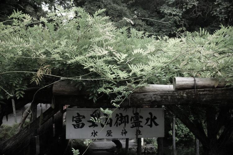 Wisteria trees beside Wakutama Pond (photo taken with Fujifilm X-T1)